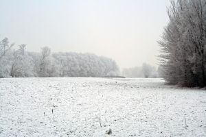 winterland 31 by priesteres-stock