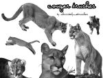 Cougar Brushes for Timebringer by christalynnebrushes