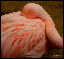 Pretty In Pink by Alabamaphoto