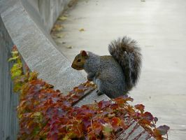 Squirrell'n Away the Day by par4islglf