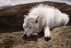 www - wild white wolf by illustraTou