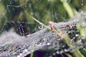 cobweb in morning dew by RETROK1D