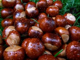 Chestnuts and raindrops by muzzy500