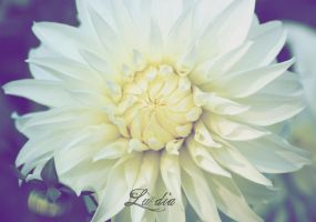 White Flower by LueDscha