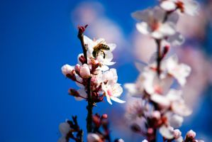 The Busy Bee by ExposurePersonality