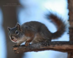 Are you NUTS? by Iamidaho