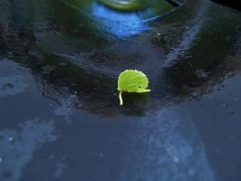 close up leaf with water by pwghost
