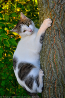 .Cats love trees. by Freaky--Like--Vivi