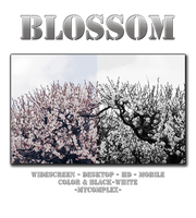 Blossom by MyCompleX