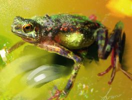 Frog Study by LindseyWArt
