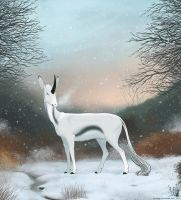 First Snow by dschunai