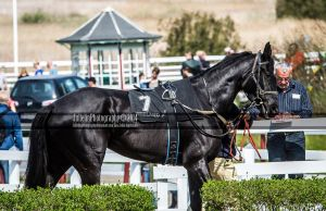 Horse Racing 359 by JullelinPhotography