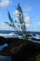 Tree Against the Sea by TaleSmith