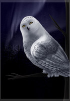 ++ Snowy Owl ++ by King-Boron