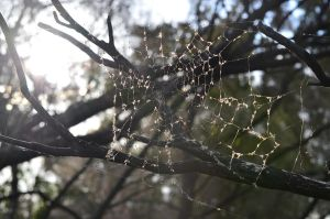 Abandoned Spider Web by A-Sped-Kid