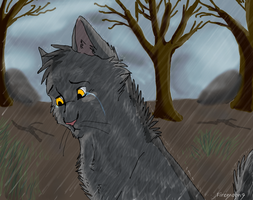 Graystripe in the rain by FireMoon9