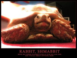 Rabbit, Shmabbit by freezejeans