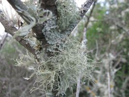 Tree Stock - Lichens 1 by Spyderwitch