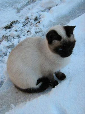 Snow kitty 4 by Sanae78 - Kedi Severlere