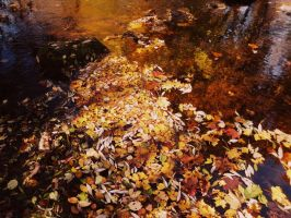 Autumn leaves by mistty002