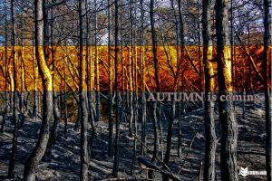 Autumn is coming by ELBengelito