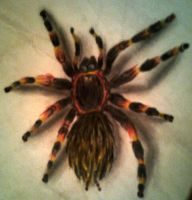 spider by SBEP