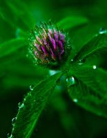 Wildflower after rain by 0raCooL