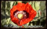 A Poppy of Remembrance by AmberCrystalElf