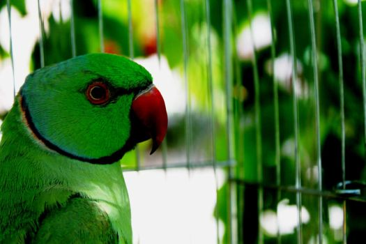 Green Parrot by GreenPasserby