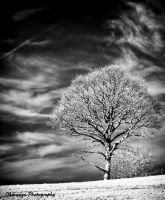 Infrared Tree and Sky by Okavanga