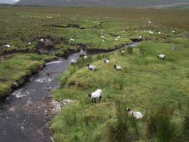 Sheepses by D1scipl31974