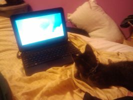 Cat Watching My Little Pony by SamRickim
