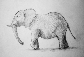 Elephant - Sketch! by Gossepojk