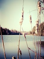 cat tails by moonshadow76