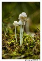 Fungus time.... by jamesboy