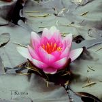 Water Lily by TRunna