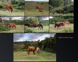 Mares and Foals New Forest NP by neverFading-stock
