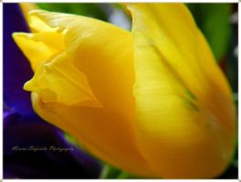 Delicate yellow by moonik9