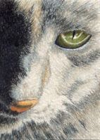 ACEO - Catseye by Maritime-Tiger