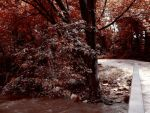 Red Forest by jasuup