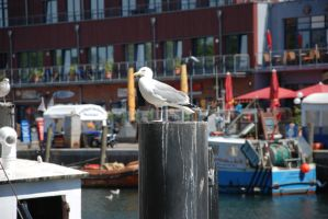seagull on a pole by ackermaennchen