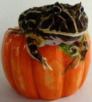 Froggie Pumpkin by PaganFireSnake