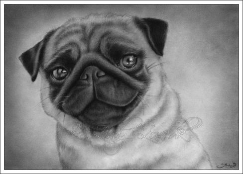 Pug Dog Drawing by Zindy