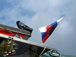 Russian flag and pigeon by nuke-vizard