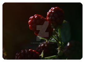 Raspberry by MoIss