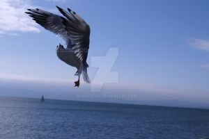 Action Seagull3 by blueMALOU