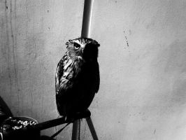 Black and white owly by KardiaArgeei