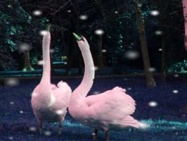 The Swan Song by Cuiniel