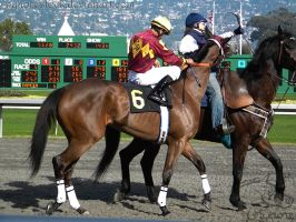 Golden Gate Fields - Racers 50 by Nyaorestock