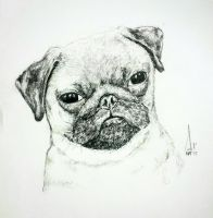PUG by Andrew-AR